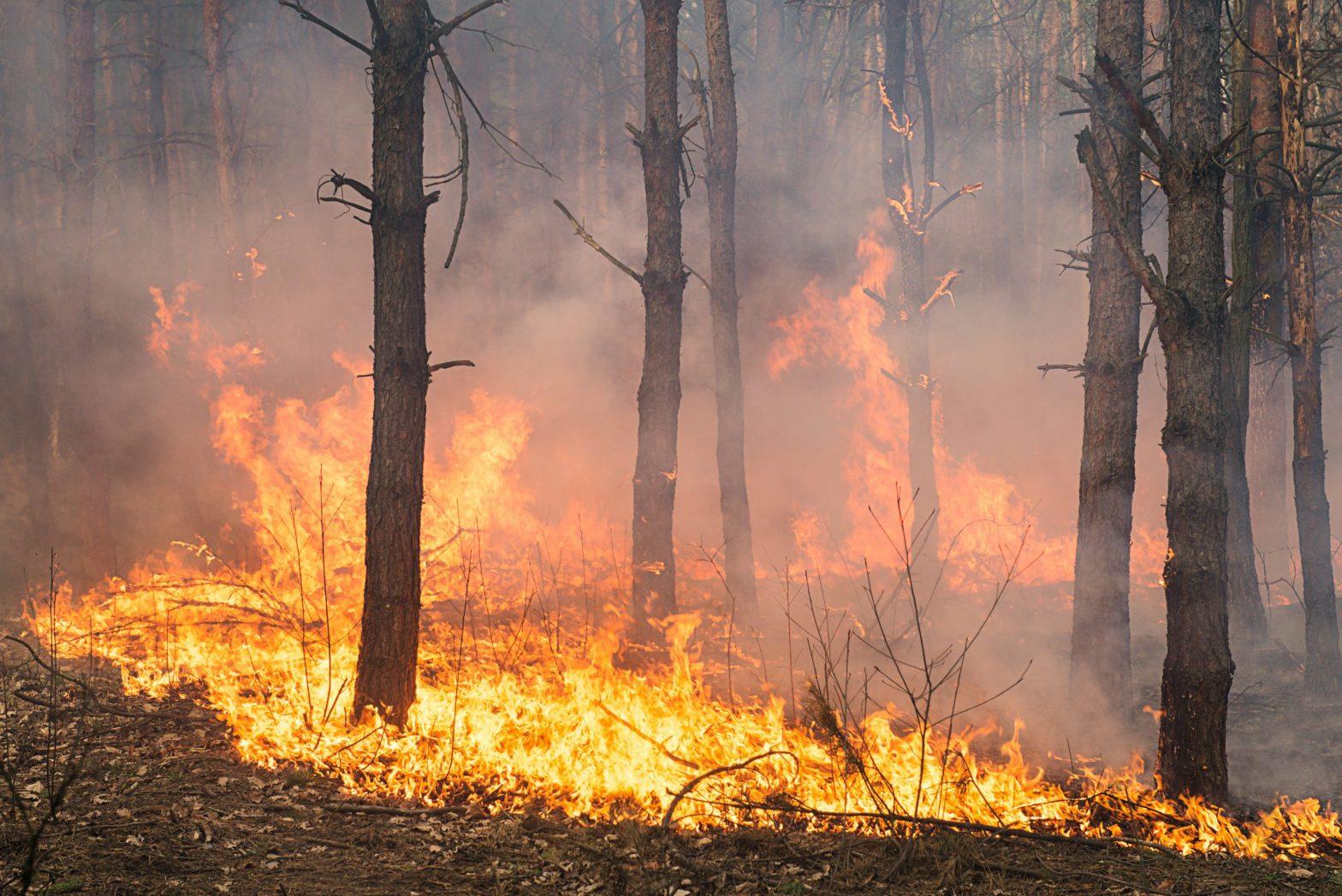 Bambang Hero Saharjo: Denda Belum Membuat Jera Para Pembakar Hutan
