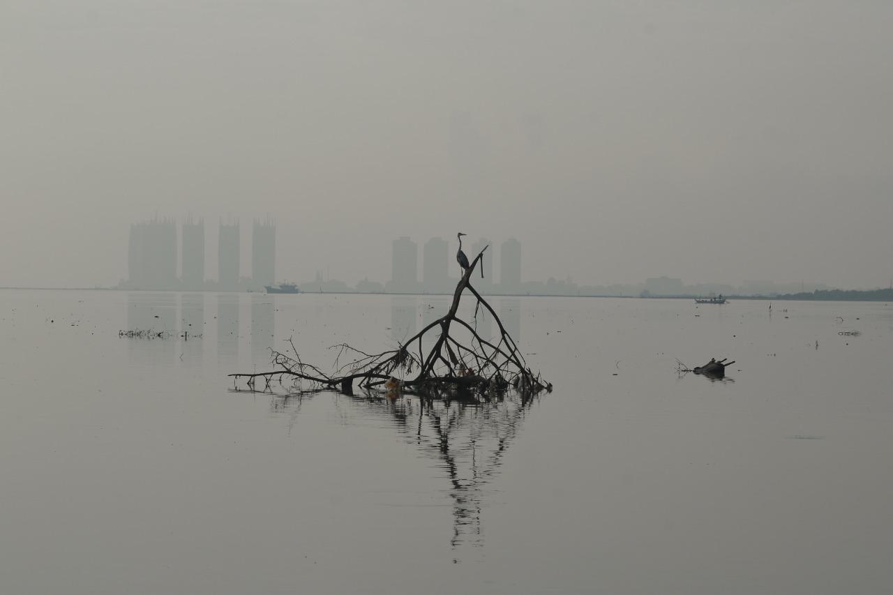 Hari Burung Migrasi Sedunia : Biodiversity Warriors Data Burung Migrasi di Perairan Jakarta