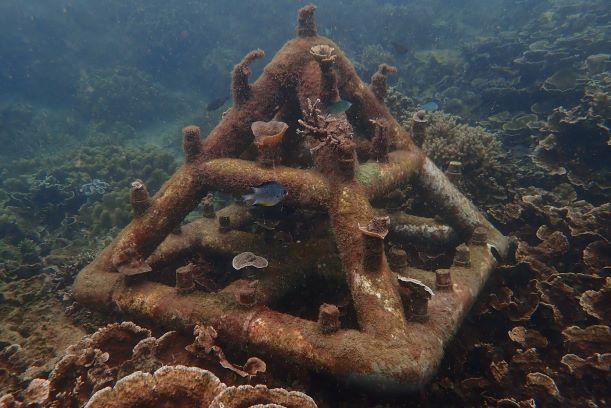 Rehabilitasi Karang, Upaya Kembalikan Ekosistem Laut Pulau Sangiang