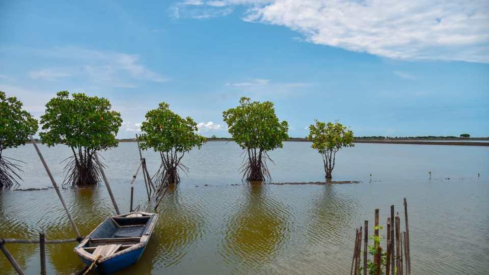 Rehabilitasi Mangrove, Tak Asal Tanam